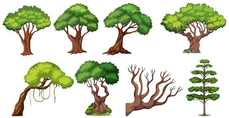 okrasné dreviny